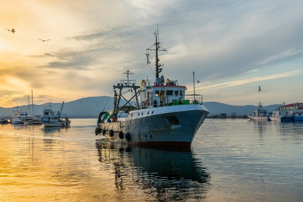 Oceana Canada has found that Canadian fisheries are being depleted, despite government commitments to protect them