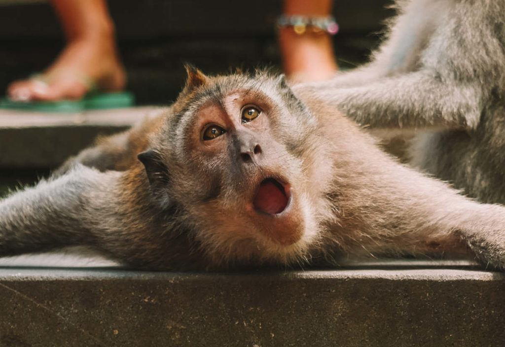 Monkeys outperform professional fund managers, partly thanks to their ability to profit from small-cap stock picks
