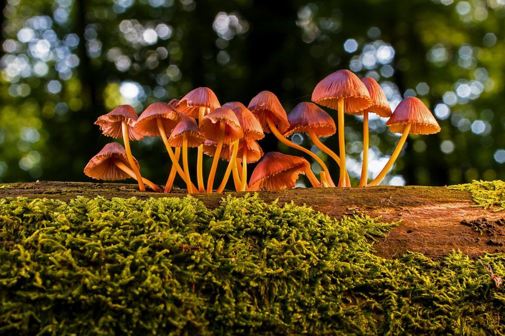 Functional Mushrooms a surprising post covid growth opportunity