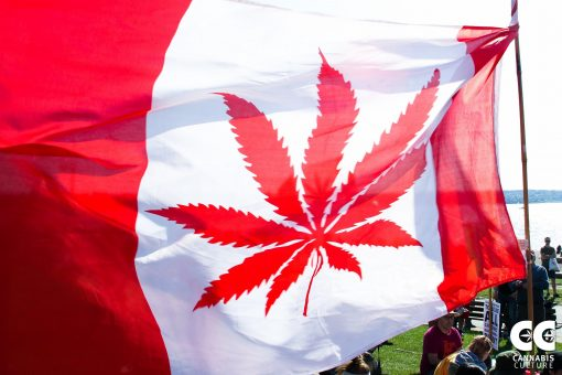 Canada now has 2 years of legal cannabis under its belt. What does the future hold?