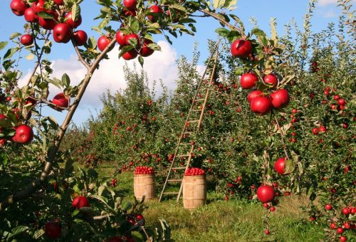 Alberta's organic market shows strong growth, encourages farmers 1