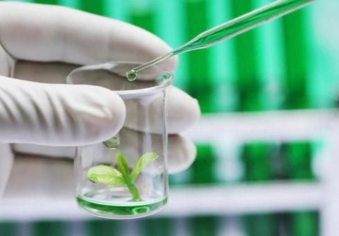 Here are the top 5 Canadian biotech stocks to watch in 2019 1