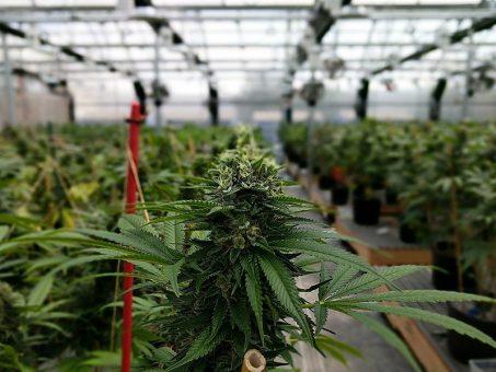 Tilray Canada's gateway into America's legal cannabis market 1